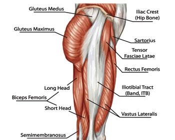 Simple back of leg diagram diy wiring diagrams lunges that relieve back pain low back pain program rh lowbackpainprogram com leg ligaments diagram back leg muscles diagram ccuart Gallery